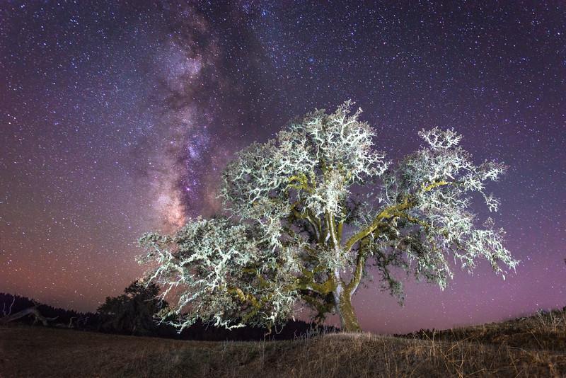 Oak & Milky Way, Sonoma County, California