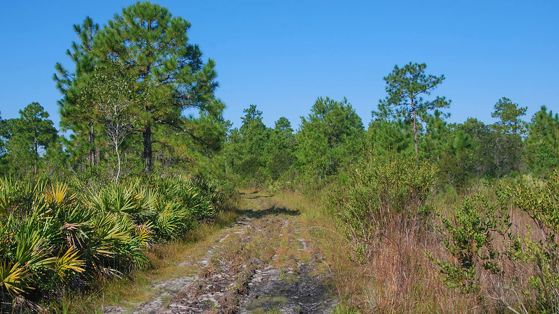 Roughed up path next to marsh