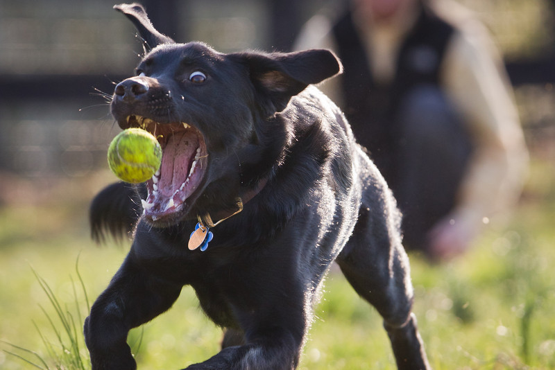 Amos playing catch at the park