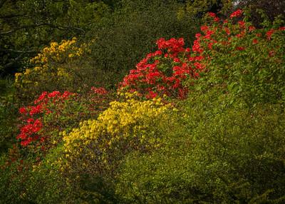 Sir Harold Hillier Gardens May 2014