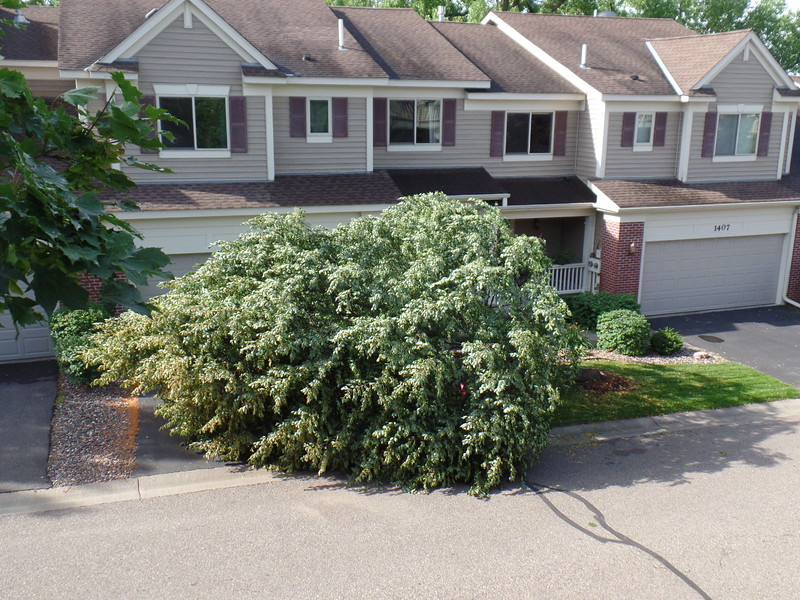 Tree in front yard of 1405 Summit Shores Drive