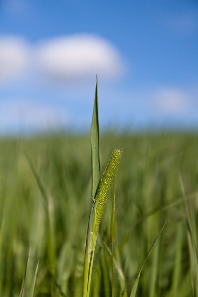 Grashøsting2011-49
