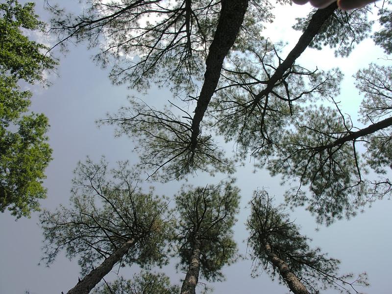 Virginia Trip 2006 - Pine Grove 10 Looking Up