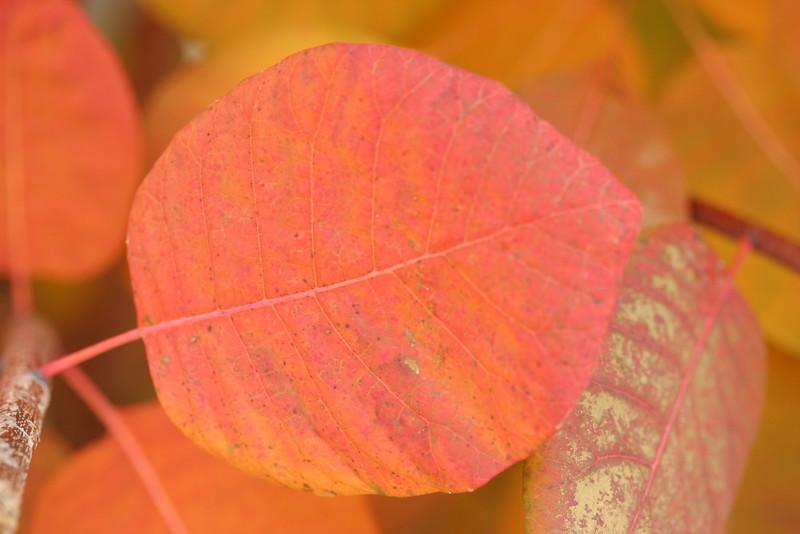 autumnal leaves 2013 014.JPG