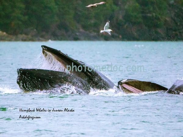 Alaska and Seattle Washington 08 /15