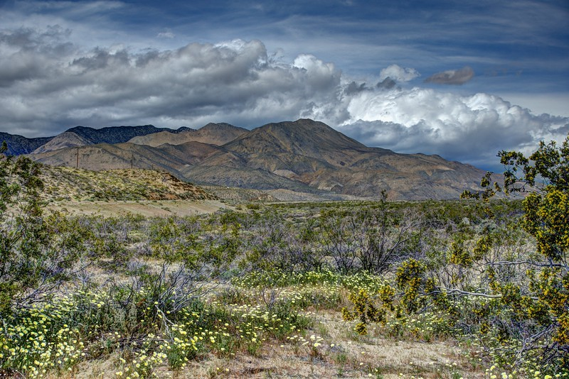 Southern Owens Valley Wildflowers