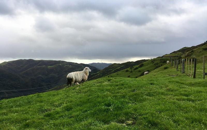 LOL, pretty much iconic New Zealand scenery