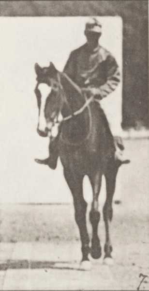 Horse Annie G. walking, saddled with a rider