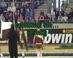 WK 2006 filmpjes
