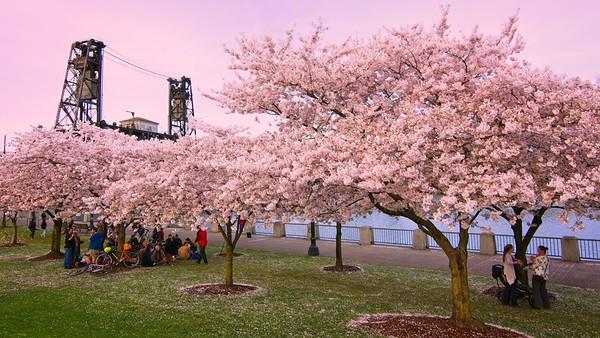 Portlandia IX - 2019/04/03.