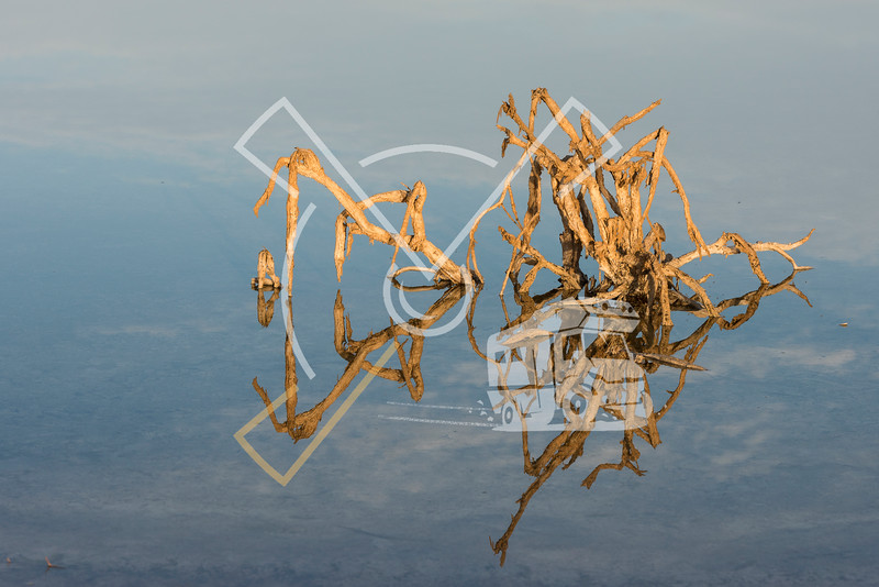 Death branches reflecting in water