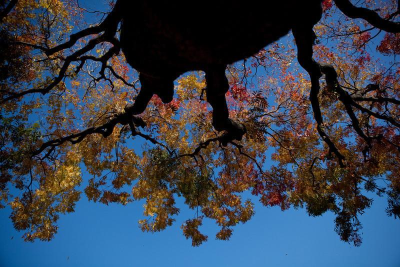 fall-3975.jpg