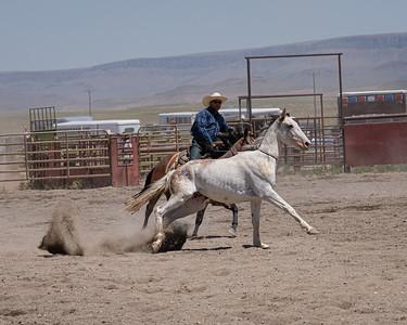 Horse Roping