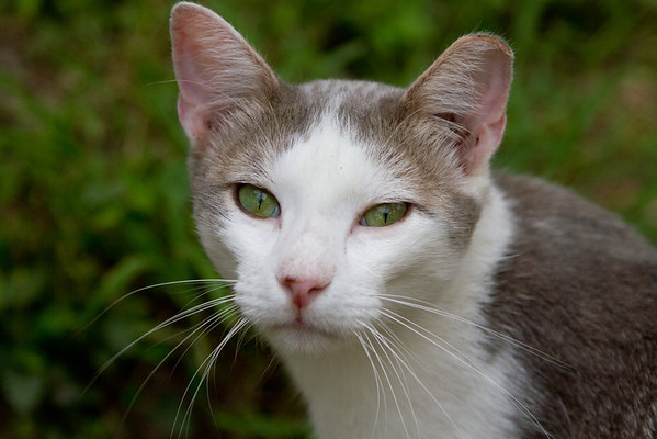 Clipped Ear Cat Sanctuary