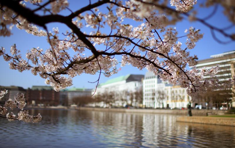 Blüten an der Binnenalster Hamburg