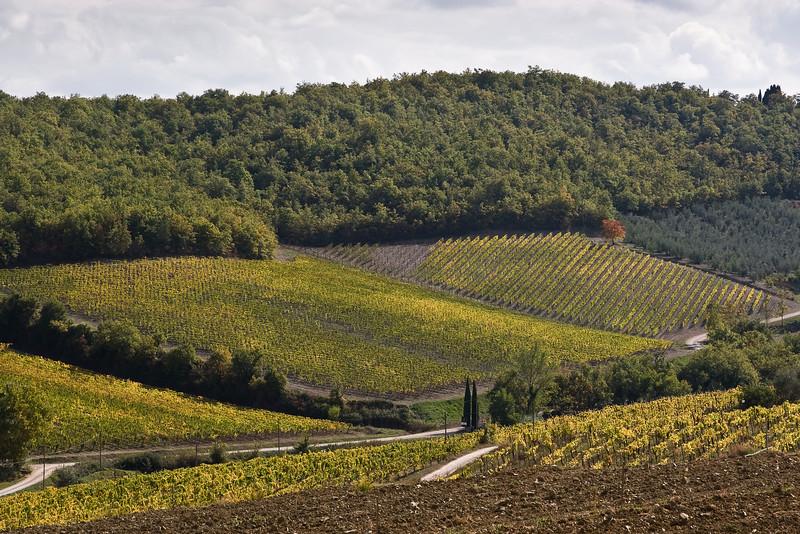 Chianti countryside