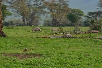1494239968African-Safari-7.jpg