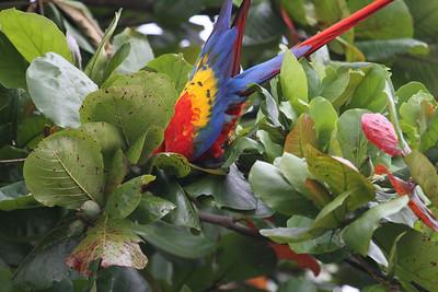 Birds - Costa Rica