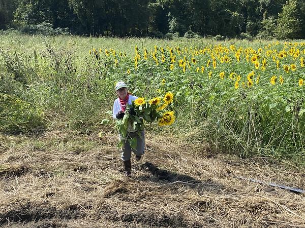 Amato Farm in September