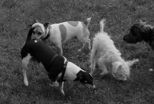 2011-07-26 Central Dog Park