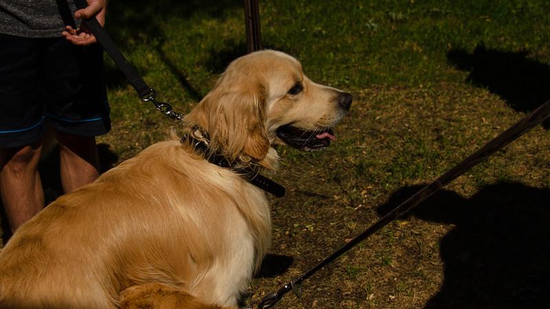 PuppyParty18-11.jpg
