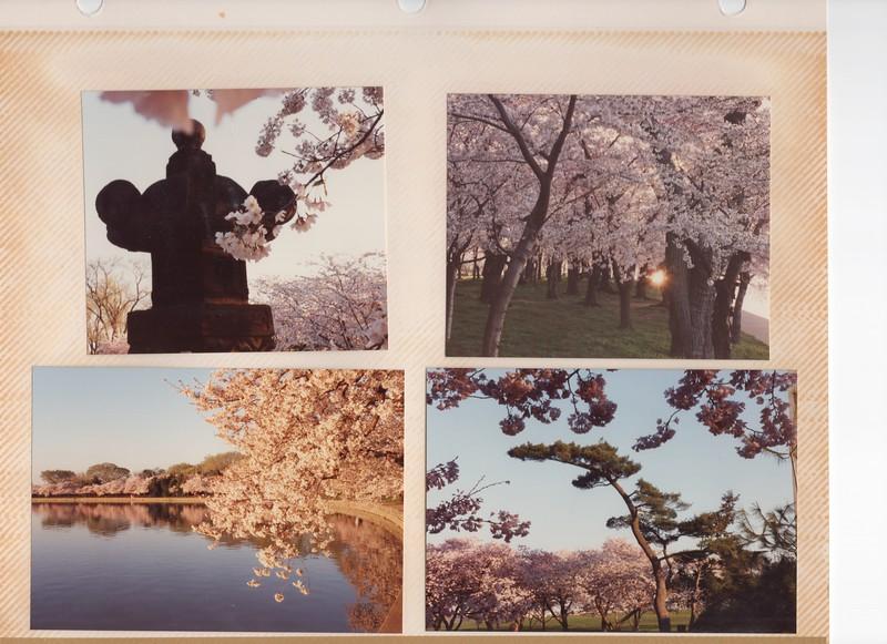 3-31-1991 Cherry 2.jpg