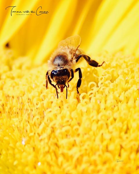 Bee 1568.jpg