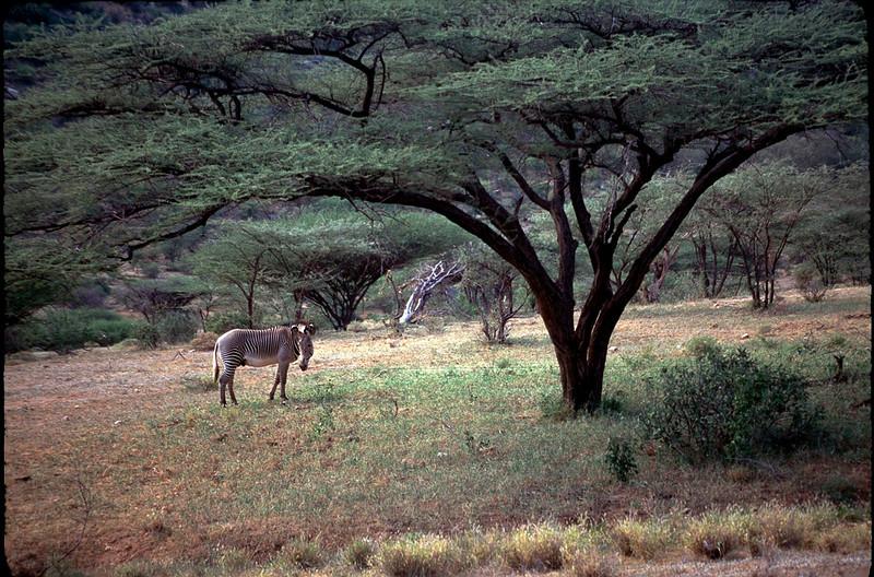 Kenya1_070.jpg