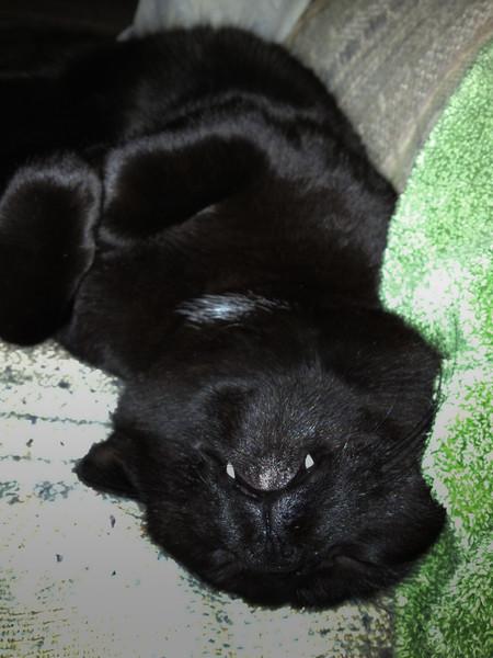 Upside down cat.