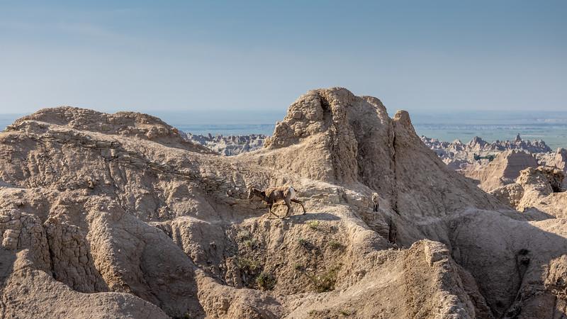mama w lamb on sheep trail thorugh the rocks -3067.jpg