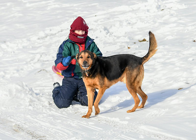 Colin Camille and Coby Sledding in Berkshire - March 2019