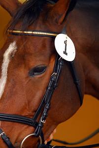 2008-10-26 USEA Horse Trial