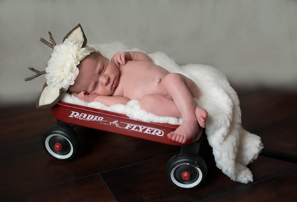 Carolynn's Newborn Session