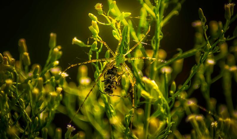 Spiders-Arachnids-041.jpg