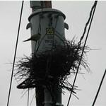 03 29 2008 ORANGE SLEEVES Used on Poles ON POLE