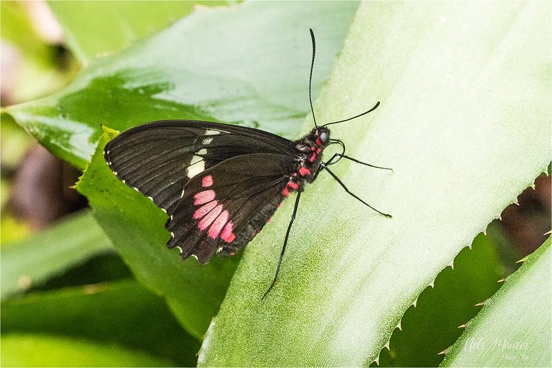 2018-02-07 Papiliorama Kerzers  - 0U5A6479-Bearbeitet.jpg