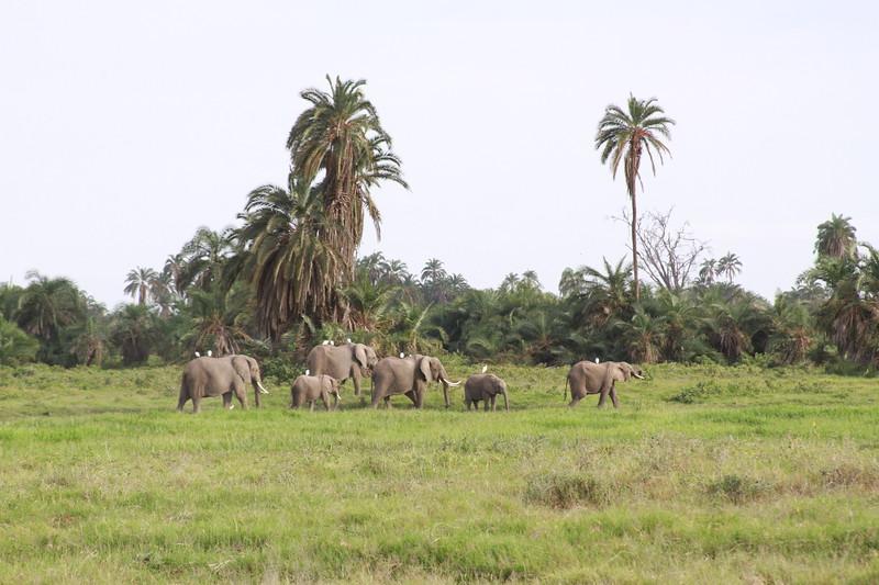 Kenya 2019 #2 559.JPG