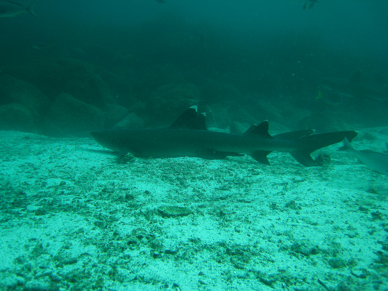 Diving in the Galapagos (157 of 392)
