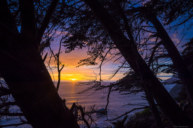 Big_Sur_Sunset_Trees_Silhouette_DSC6327.jpg