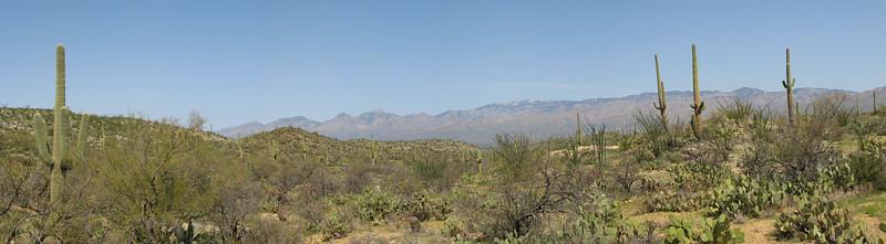 Saguaro Panoramic