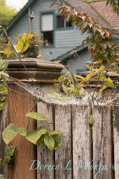 Spider webbing on fence post_2205.jpg