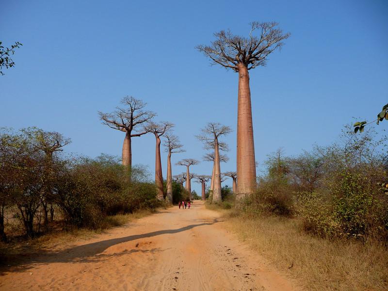 008_0181 Baobab Alley.jpg