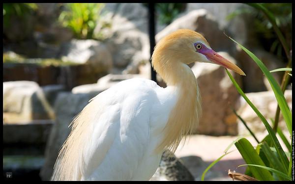 140223 KL Bird Park