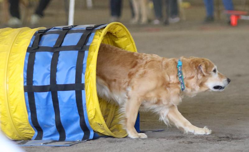 3-15-2015 Bloodhound-1537.jpg