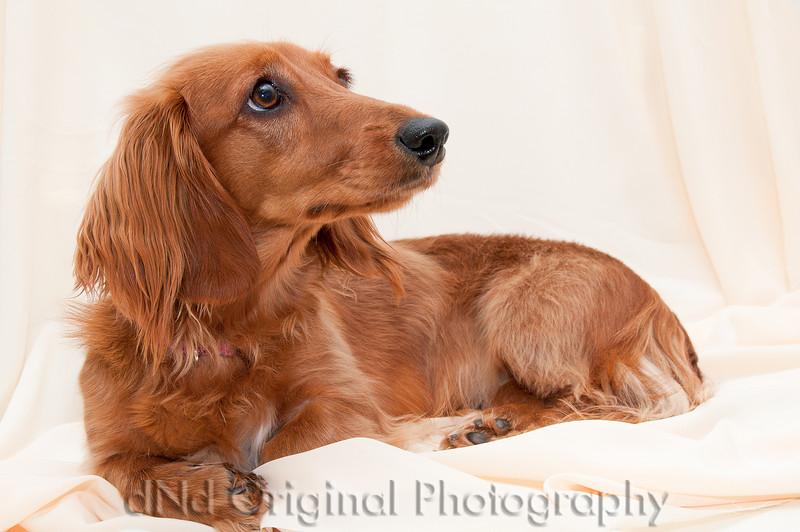 22 Linda's Dog.jpg