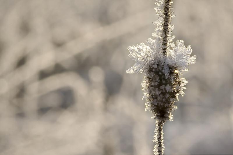 Frosty_greeting.jpg