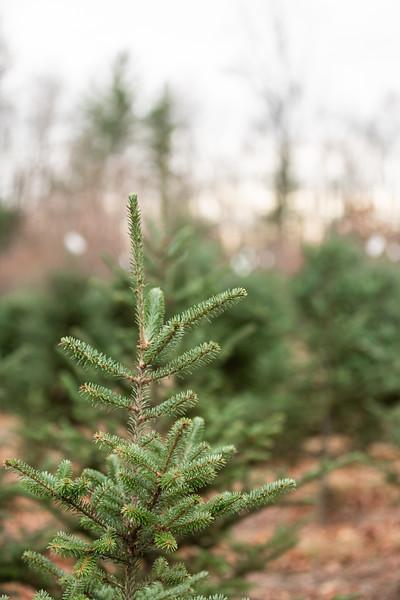 EvergreenFarm-7.jpg