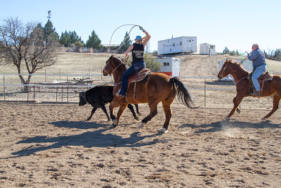 2017-Sunday Roping-0004