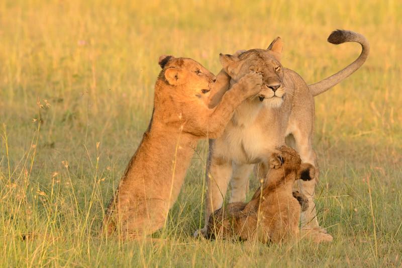 20160215__KET7451_Serengeti_Day_7.jpg