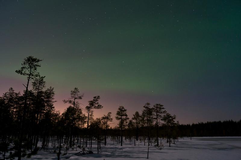 Aurora Borealis and Pinetrees